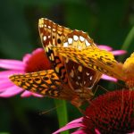 Kid's Club: Birds, Bees, and Butterflies