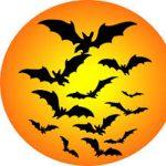 Evening Halloween Tours