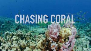 SciFest: Chasing Coral