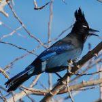 SciFest: Introduction to Birding