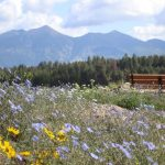 SciFest: The Arboretum at Flagstaff Fall Open House