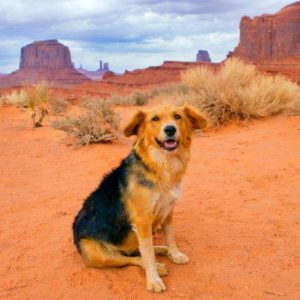 Rez Dog Biographies