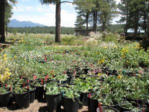 Spring Plant Sale & Fest
