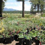 Summer Plant Sale