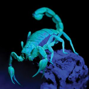 STEAM Second Saturday: Amazing Arthropods