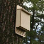 Willow Bend Habitat Enhancement