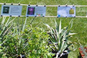 Master Gardener Plant Sale and Festival