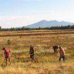 Weed Pull at Kachina Wetlands
