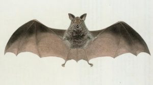 Night at the Museum: We've Got Bats In Our Bellfry!