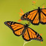 Sci Fest: Chasing Butterflies