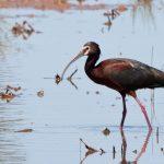 Kachina Wetlands Bird Walk