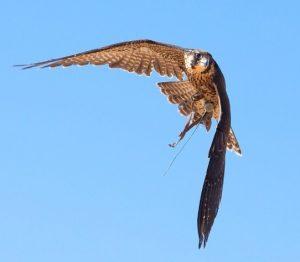 Family Science: Birds of Arizona