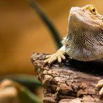 STEAM Second Saturdays: Reptiles