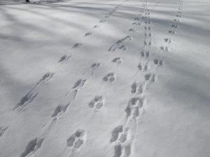 Adult Workshop: Basics of Wildlife Tracking