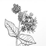 Adult Workshop: Basics of Botanical Illustration