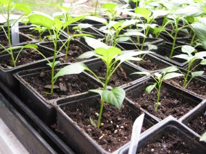 Adult Workshop: Starting Seeds at Home for Your Su...