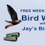 Guided Bird Walks with Jay's Bird Barn