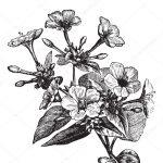 Basics of Botanical Illustration Workshop
