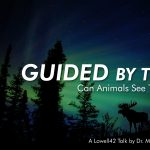Lowell42: Guided by the Night: Can Animals See the Stars?