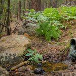 Springs Restoration on the Colorado Plateau