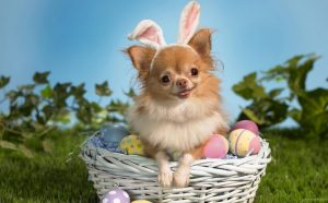 Pet Photos With The Easter Bunny