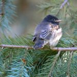 Arboretum Bird Walks
