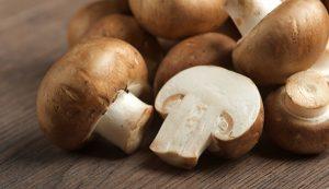 Arboretum Mushroom Weekend