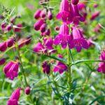 3rd Annual Master Gardener Plant Sale & Garden Festival