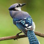 13th Annual Arizona Field Ornithologists Meeting