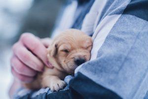 November Locals' Night & Puppy Treat Trail
