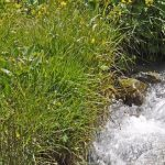 2 Hour Talk: Protecting and Restoring Northern Arizona Springs