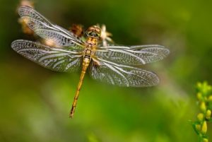 STEAM Second Saturday - Dragonflies and Damselflie...