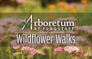 Wildflower Walks at The Arboretum
