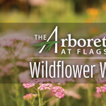 Wildflower Walks at The Arboretum