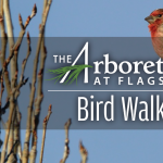 Bird Walks at The Arboretum