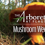*CANCELED* Mushroom Weekend at The Arboretum at Flagstaff