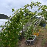 VIRTUAL tour of Colton Community Garden