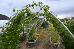 VIRTUAL tour of Colton Community Garden