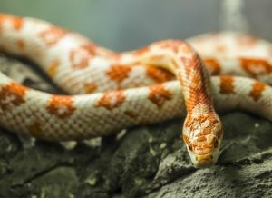 Family Fridays- All About Reptiles