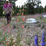 Tuesday Plant Talk: Living Roof Garden