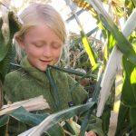 Family Friday: Corn