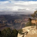 Grand Canyon Life in Changing Climate Talk