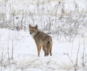 Family Friday: Animals in winter