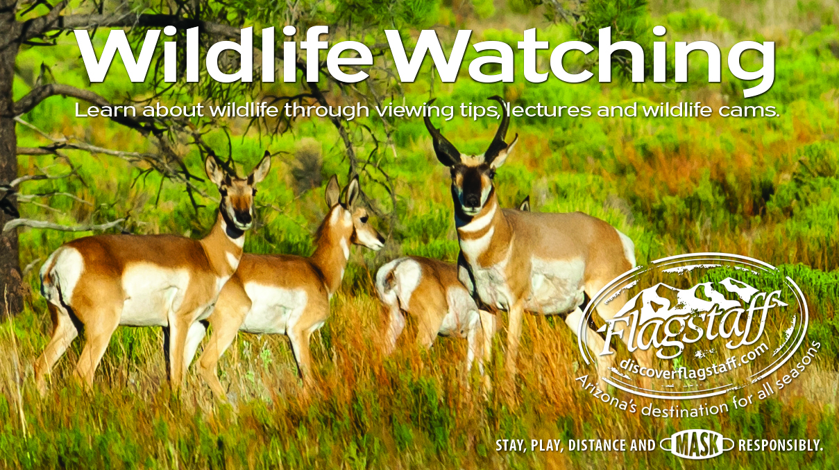 Ad for Wildlife Watching from Discover Flagstaff