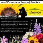 2021 Wildflower Walks @ The Arb