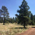 McMillan Mesa Family Guided Hike