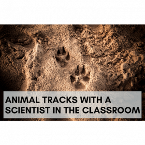 Animal Tracks with a Scientist in the Classroom