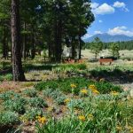 Lunchtime Virtual Lecture: Frances McAllister and the History of The Arboretum at Flagstaff