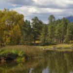 Community Invasive Weed Control