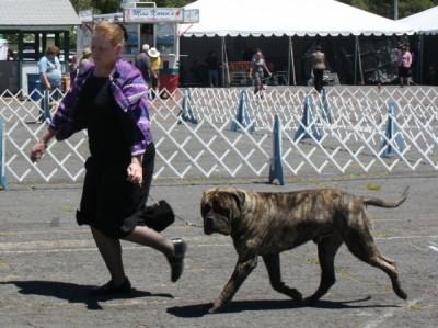 Flagstaff Kennel Club 20th Dog Shows